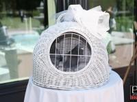 Vypustanie holubov na svadbe