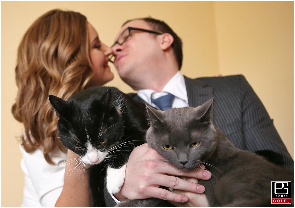 Mačky a naša svadba