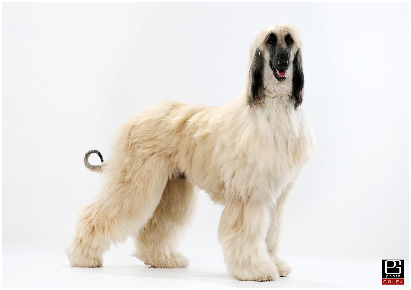Fotky psov do kalendara